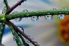 The water drops are acting as a natural lens, and refracting the daisy in the background, beautiful.