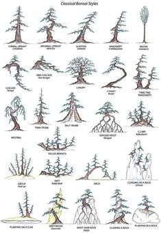 Bonsai Styles | Copy+of+All_Bonsai-styles.JPG