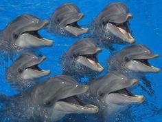 Hay más cosas en el cielo y en la Tierra ...: Delfines E.T.