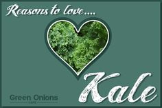 Ten Health Benefits of KaleBefore we get to all the benefits, let me briefly explain what kale is… Kale is a popular vegetable, a member of the cabbage fami Most Nutrient Dense Foods, Green Cafe, Pressed Juice, Green Onions, Fruit Smoothies, No Cook Meals, Kale, Planets, Collard Greens