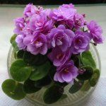 Magnolia, Gardening, Plants, Garten, Lawn And Garden, Planters, Plant, Square Foot Gardening