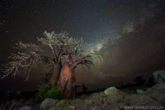 Kubu Island, Makgadikgadi Pans, Botswana  The Milky-Way burns bright above the incredible landscape of Kubu Island in the Makgadikgadi Pans of Botswana. These iconic Kubu Baobabs stand strong and tall in this harsh environment. Kubu Island takes on an increased eeriness at night, under magnificent star filled skies.  Caption and landscape photography by Mark Dumbleton.  Link at:   http://www.markdumbleton.com/botswana/nocturnal-kubu/