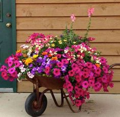Wave petunias: hot pink, purple, lavender, white/pink blanket flower, small yellow, orange daisys, pink snapdragons