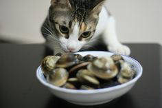 Tips for Putting Your #Cat on a #Diet - In this blog we will tell you how too find out if your cat is overweight and how to make the changes to your cats diets for the better.