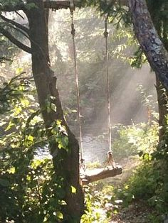Light blanketing leaves, a rope swing tucked way and tied to a branch.