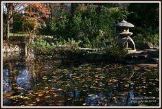 "Gradina botanica ""Alexandru Borza"" – Cluj / Botanical Garden of Cluj | Calatorind prin tara,"