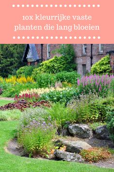 Growing Irises, Tropical Garden Design, Specimen Trees, Planting Plan, Gardening For Beginners, Garden Planning, Ecology, New Trends, Vegetable Garden