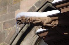 Wasserspeier am Freiburger Münster - Froschartiges Wesen