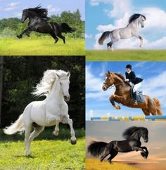 horse hd pictures