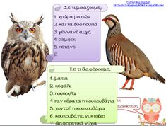 Νηπιαγωγός για πάντα....: Μαθαίνουμε και παίζουμε.. παρέα με την Βάγια την Κουκουβάγια! Bird, Animals, Animales, Animaux, Birds, Animal, Animais