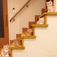 "From @yuriyuri4mama: ""Five munchkin baby siblings."" #catsofinstagram by cats_of_instagram"