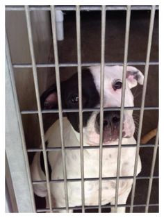 Adopt PUPPY #A454312 ***URGENT*** San Bernardino City AC. Kali is a 6 month old female pup who was living in abandoned house with squatters , and now here! Can you imagine having her own home ? I can , let's get her out please? ID #A454312 Available October 7 San Bernardino City Shelter 333 Chandler Place, San Bernardino, CA 92408 Open Tuesday-Saturday 10:00am to 5:00pm Shelter is closed Sunday and Monday  http://www.petharbor.com/pet.asp?uaid=SBCT.A454312