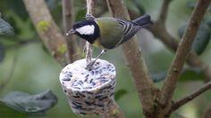 göra egen fågelmat recept