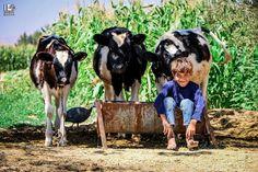 أنا وبقراتي التلاتة D أوتايا الغوطة الشرقية في 7 9 2016 Otaya Eastern Ghouta On 7 9 2016 My Three Cows And I D Sy Photo Wonders Of The World Animals