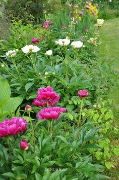 Garden Design, Plants, Farmhouse, Landscape Designs, Plant, Planets, Yard Design