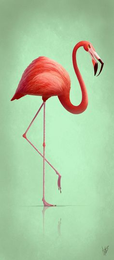 ArtStation - animal character design, Eran Alboher // https://www.artstation.com/artwork/eg8a6