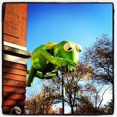Kermit at the Macy's Thanksgiving Day Parade