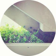 happymundane on Instagram