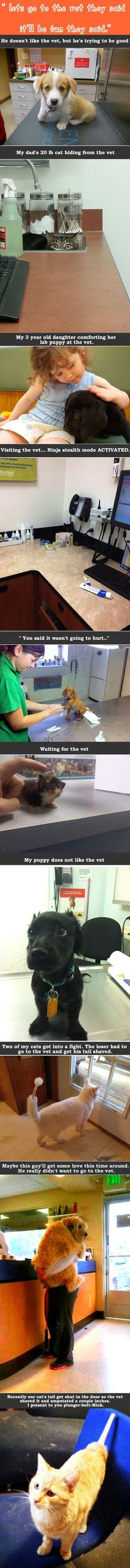 """let's go to the vet they said, it'll be fun they said."" These poor pets and their rational fears of the vet!"