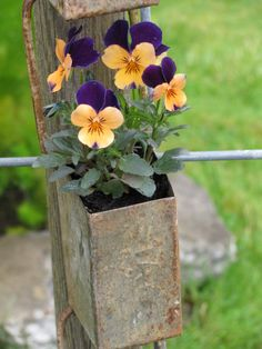 Pansies in rustic container hanging outside