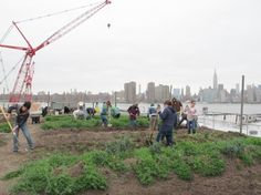 Eagle Street Rooftop Farm (I'm the one on the right side in the green hat).
