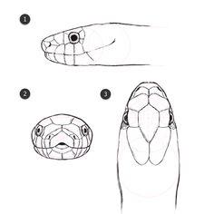 head horizontal 2