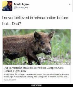 Reincarnation#funny #lol #lolzcat