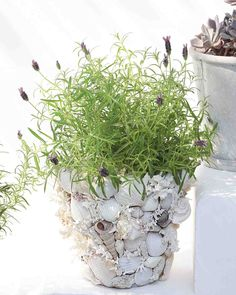 Shell Garden Pots How-To