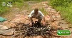 Ấn Độ Thả vào rừng hơn 300 con rắn cực độc - Tin tức 24h