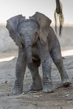 Need a smile? Here ya go. #elephant