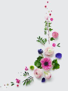 Plants in a flatlay Flowers Nature, My Flower, Flower Art, Beautiful Flowers, Arte Floral, Deco Floral, Flower Backgrounds, Flower Wallpaper, Iphone Wallpaper