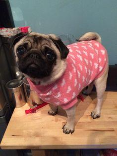 Cute Pug https://www.youtube.com/watch?v=9p1mn8D2-OE