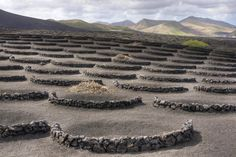 #LaGeria is a unique cultural landscape in #Lanzarote, #Spain. Semi-circular #stonewalls protect verdant #vines from the relentless blowing trad...
