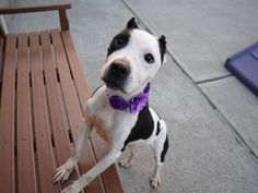 KHALIA - A1100682 - - Brooklyn  Please Share:TO BE DESTROYED 01/07/17**ON PUBLIC LIST** -  Click for info & Current Status: http://nycdogs.urgentpodr.org/khalia-a1100682/