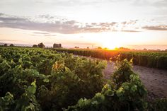 The Top 10 Washington Wines of 2015 | Seattle Met