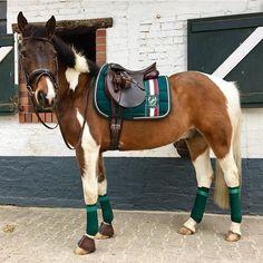 Das Pony von @moe_mara trägt die Eskadron Heritage BS in Racinggreen mit passenden Bandagen ...