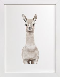 """Baby Animal Llama"" - Limited Edition Art Print by Cass Loh in beautiful frame options and a variety of sizes."