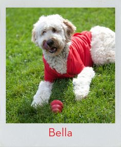 This beauty's very aptly named… meet Bella! She is my furry child ! Kong Company, Dog Test, Office Dog, Spiritual Quotes, Dog Love, Meet, Children, Dogs, Beauty