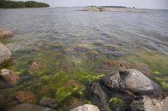 Ravinnekuormitus voimistaa Itämeren rehevöitymistä ja levien kasvua. Kuluttaja voi vaikuttaa kuormitukseensa esimerkiksi ruokavalinnoilla.