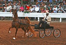 American Saddlebred - Wikipedia