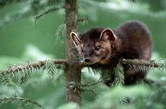 Central Appalachian Mountains   Appalachian Mountains Animals