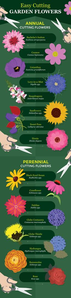 Easy Flowers For Cutting - A Guide to Growing Your Own Cutting Flowers
