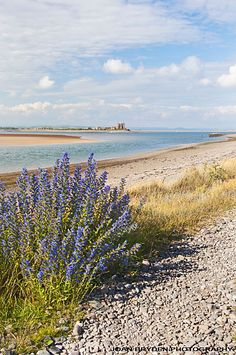 South Walney Nature Reserve, Barrow in Furness, Cumbria
