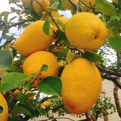 El #otoño🍁 es estación de #fruto #🍒 #🍇 #🍎 #🍋 Llevamos #bonitos #frutos👼🏻 #iddsmm #Iglesia_de_Dios_Sociedad_Misionera_Mundial #ahnsahnghong #madre_celestial #Dios_Elohim #corea #🇰🇷