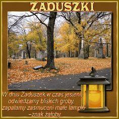 2 Advent, Forest School, New Forest, November, Marvel, Outdoor Decor, Plants, Religion, Good Morning