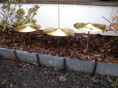 using old cymbals to play music in the rain