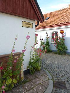My favorite flower and an idyllic little town. Ystad, Sweden.