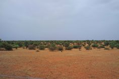Kalahari Miraculously Transforms from Desert to 'Scottish Highlands' as it Rains Down in Africa PHOTOS
