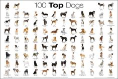A chart of the top 100 Dog breeds