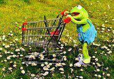 500+ Free Kermit & Frog Images - Pixabay